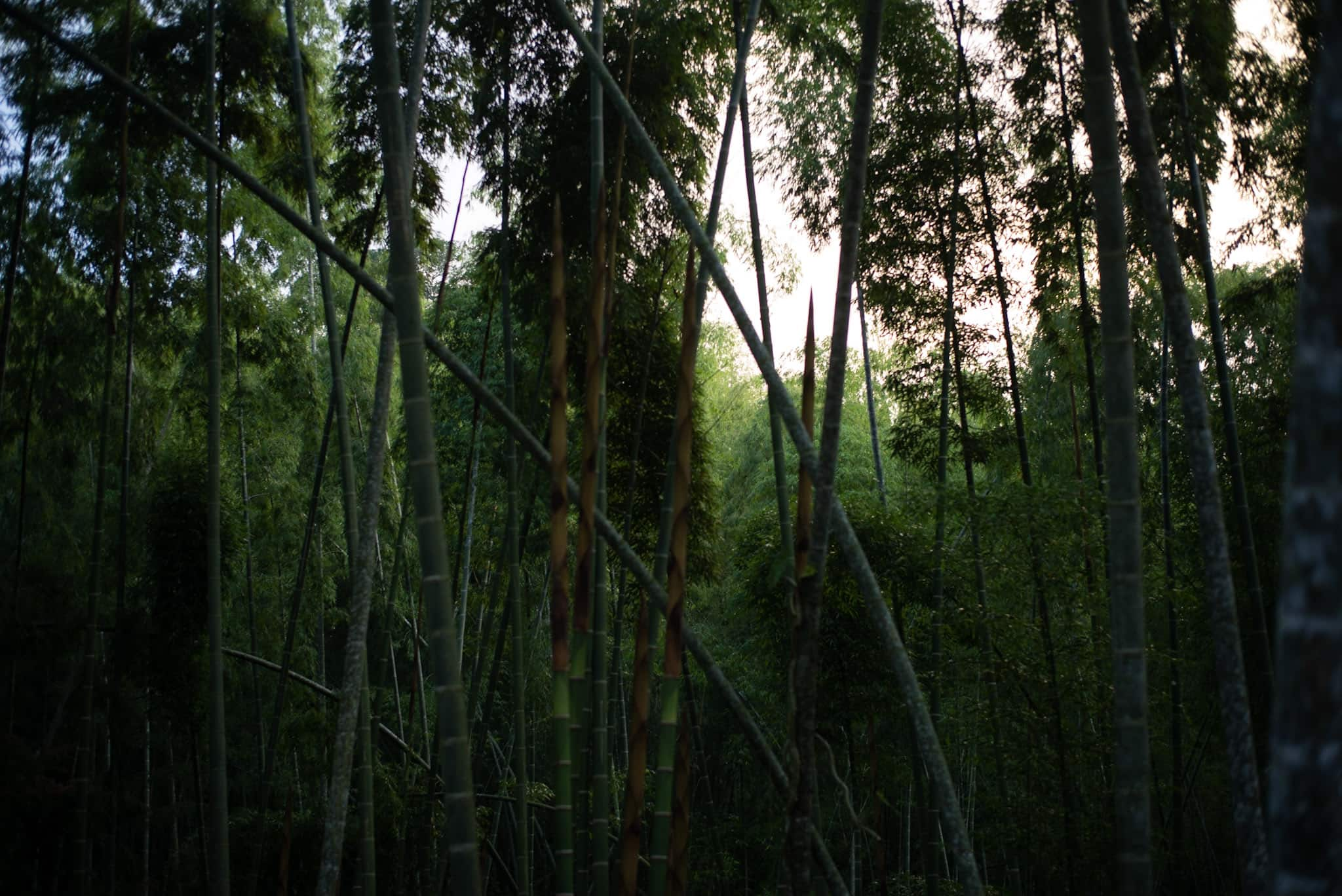 /img/pages/bamboo-textile/colombia/Bamboo_forest_in_Manizales,_Colombia.jpg