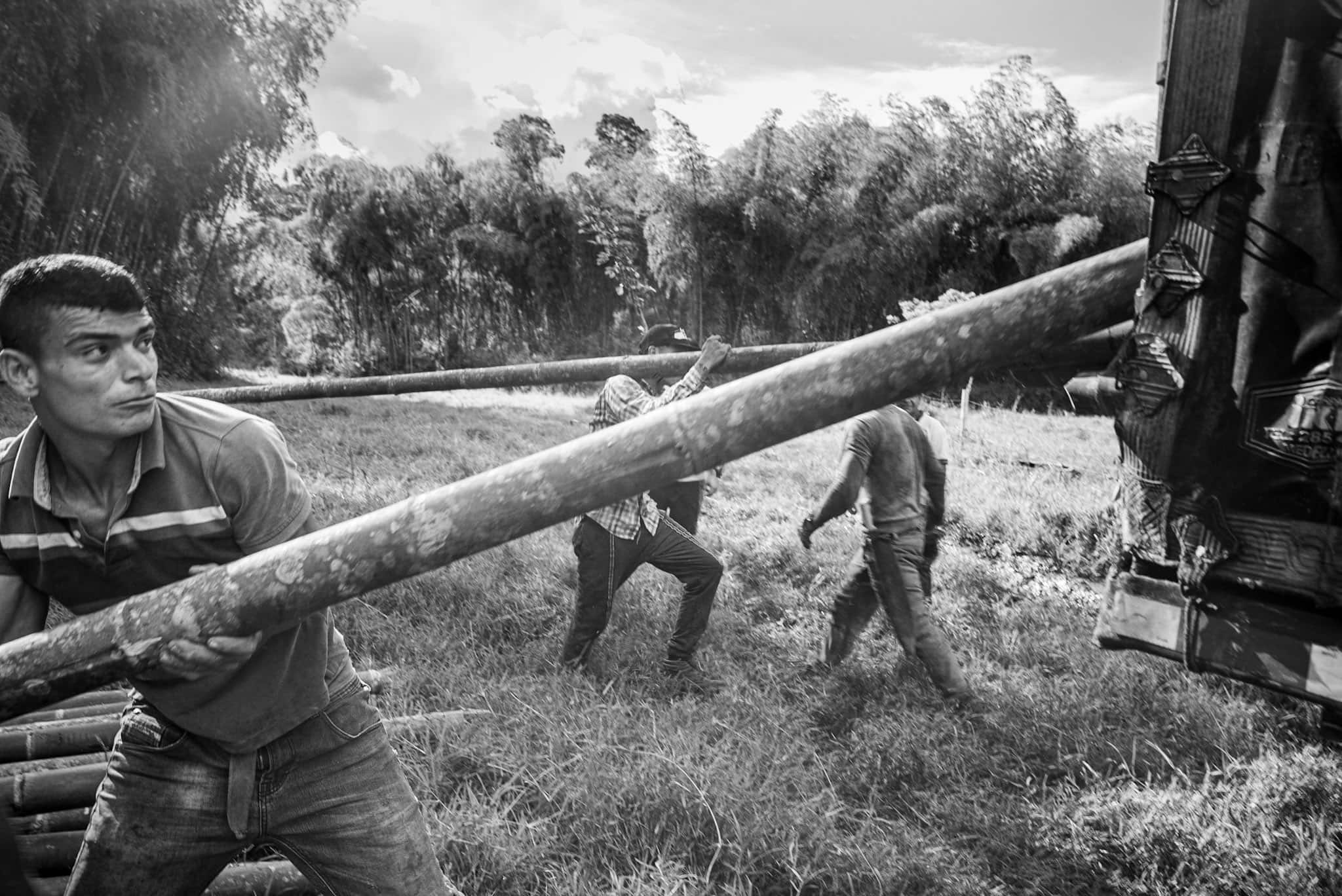 /img/pages/bamboo-textile/colombia/Bamboo_harvesting_in_Colombia.jpg